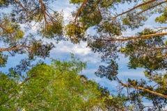 Bosque de hojas caducas-conífero mezclado Fotografía de archivo