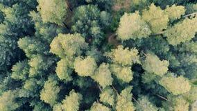 Bosque de hojas caducas con los árboles y caminos en una visión superior almacen de video