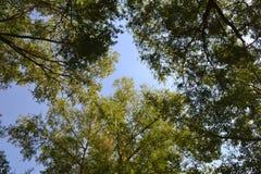 Bosque de hojas caducas de Marge Fotos de archivo
