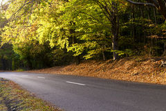 Bosque de hojas caducas en otoño, camino de enrollamiento. Foto de archivo libre de regalías