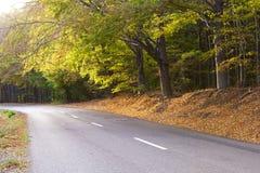 Bosque de hojas caducas en otoño, camino de enrollamiento. Imagen de archivo libre de regalías