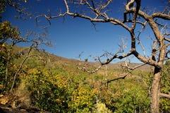 Bosque de hojas caducas en sequedad Foto de archivo libre de regalías