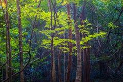Bosque de hojas caducas mezclado imagen de archivo