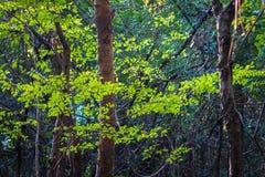Bosque de hojas caducas mezclado imágenes de archivo libres de regalías
