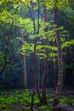 Bosque de hojas caducas mezclado fotografía de archivo