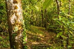 Bosque de hojas caducas mezclado Imagen de archivo libre de regalías