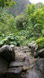 Bosque de Iao Fotografía de archivo