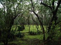 Bosque de Indian Hills en lluvia imagen de archivo