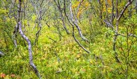 Bosque de Islandic Imagen de archivo libre de regalías