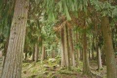 Bosque de la alta montaña en primavera Fotos de archivo