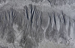Bosque de la arena Imagenes de archivo