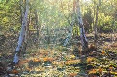 Bosque de la caída Imagen de archivo libre de regalías