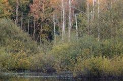 Bosque de la caída Foto de archivo