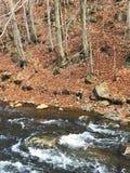 Bosque de la cala Fotografía de archivo libre de regalías