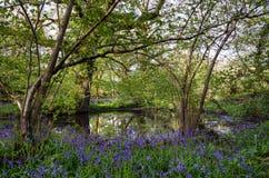 Bosque de la campanilla Imagenes de archivo
