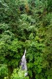 Bosque de la cascada y del borrachín Foto de archivo
