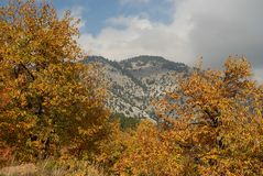 Bosque de la castaña en las cuestas de Parnona Imagen de archivo libre de regalías