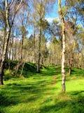 Bosque de la colina del tronco, Derbyshire Fotografía de archivo