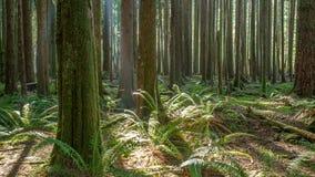 Bosque de la Columbia Británica imagen de archivo libre de regalías