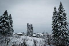 Bosque de la conífera en invierno foto de archivo