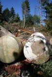 Bosque de la contaminación del desecho del hierro Imagen de archivo