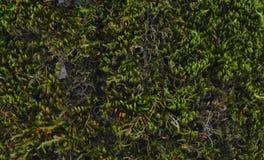 Bosque de la corteza de árbol Fotografía de archivo libre de regalías
