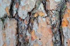 Bosque de la corteza de árbol Imagen de archivo libre de regalías
