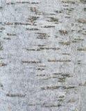 Bosque de la corteza de árbol Imágenes de archivo libres de regalías