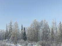 Bosque de la cubierta de nieve fotografía de archivo libre de regalías