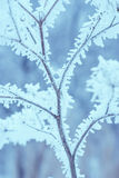 Bosque 39 de la escarcha Imágenes de archivo libres de regalías