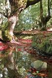 Bosque de la fantasía Fotos de archivo libres de regalías