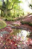 Bosque de la fantasía Foto de archivo