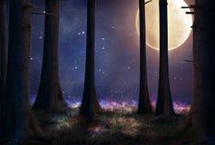 Bosque de la fantasía en la noche Imagenes de archivo