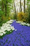 Bosque de la flor Fotos de archivo