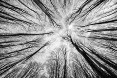 Bosque de la haya Foto de archivo libre de regalías