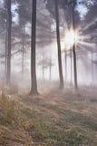 Bosque de la haya Imagenes de archivo