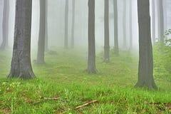 Bosque de la haya Fotos de archivo