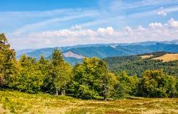 Bosque de la haya abajo de la ladera del canto de la montaña Fotografía de archivo libre de regalías