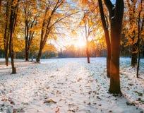 Bosque de la haya de la montaña de octubre con la primera nieve del invierno Imagen de archivo libre de regalías