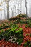 Bosque de la haya del otoño con las rocas Fotografía de archivo