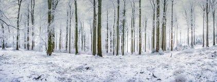 Bosque de la haya del panorama Foto de archivo libre de regalías