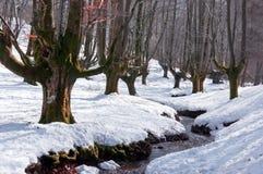 Bosque de la haya Nevado con una corriente imagenes de archivo