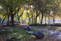 Bosque de la mañana foto de archivo libre de regalías