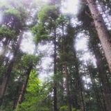 Bosque de la mañana Fotografía de archivo