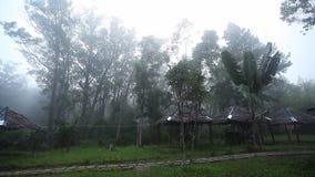 Bosque de la mañana con niebla y canciones ruidosas de Indri almacen de metraje de vídeo