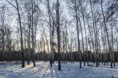 Bosque de la mañana del invierno Imagen de archivo libre de regalías