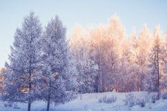 Bosque de la mañana del invierno Fotos de archivo
