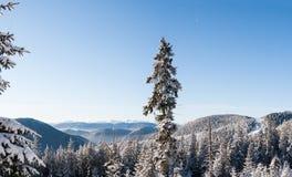 Bosque de la mañana y cordillera nevados de Montenegro en la distancia fotografía de archivo libre de regalías