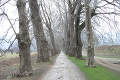 Bosque de la manera Imagen de archivo libre de regalías