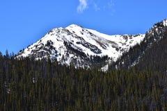 Bosque de la montaña Fotografía de archivo